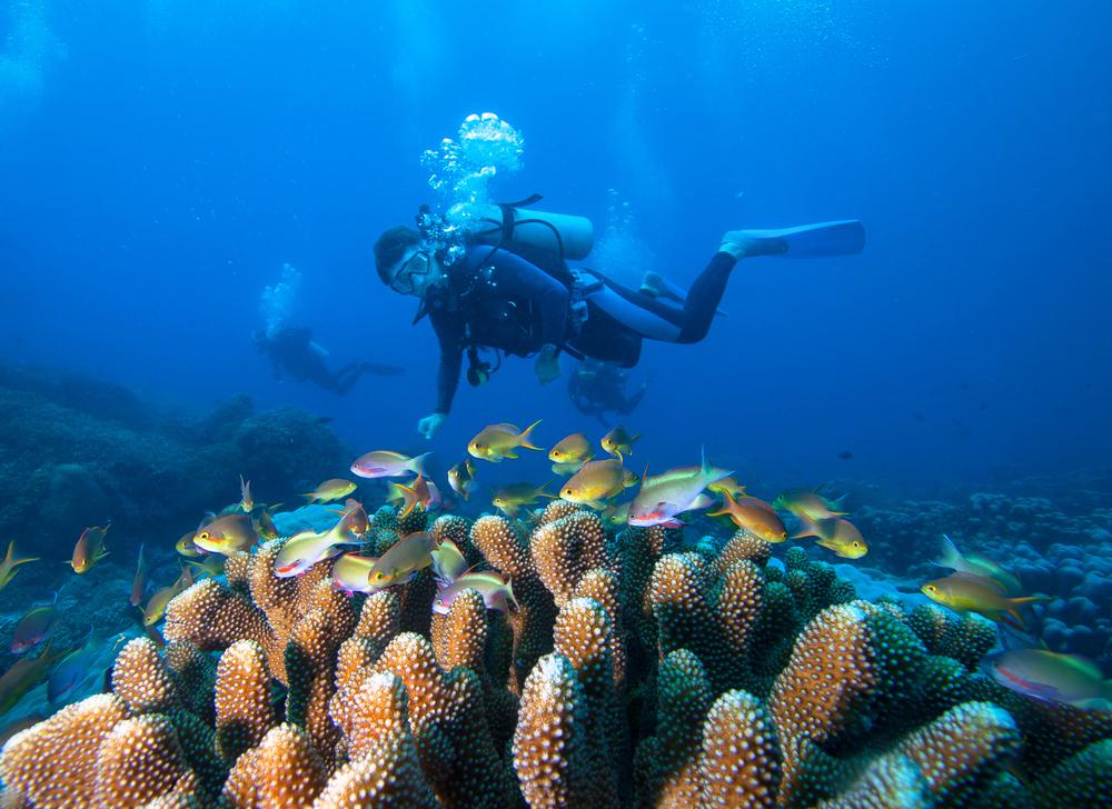 Diving di Laut Bunaken